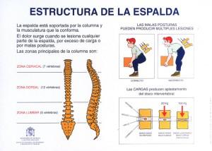 estructura de la espalda
