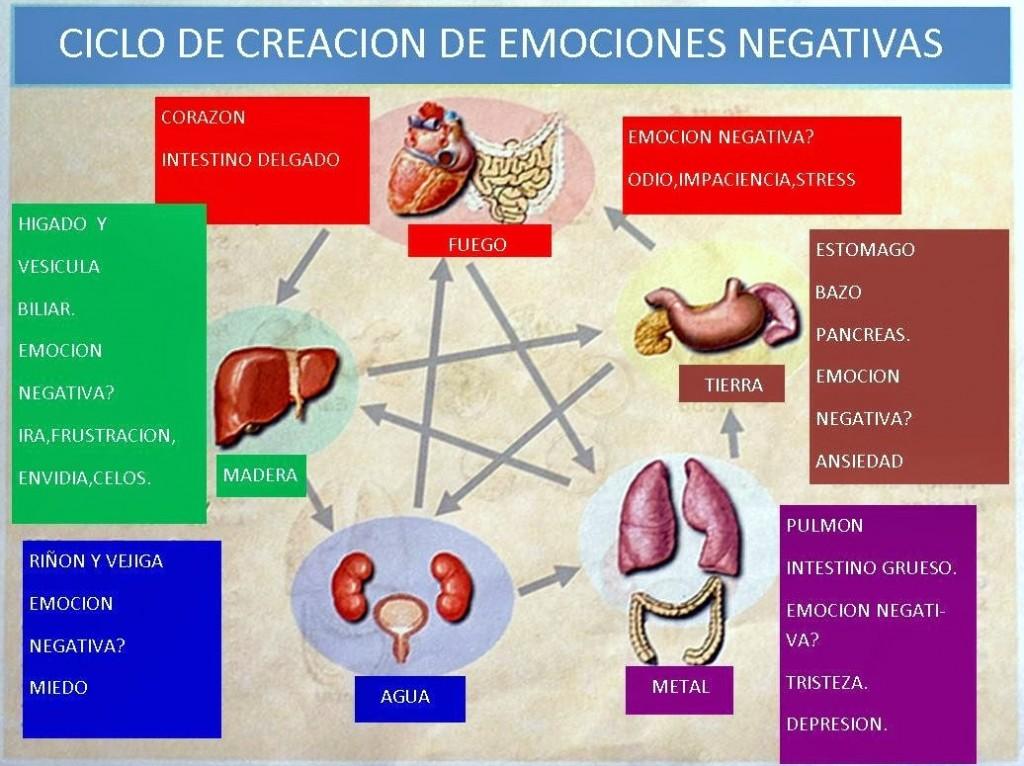 ciclo creación emociones negativas en medicina china