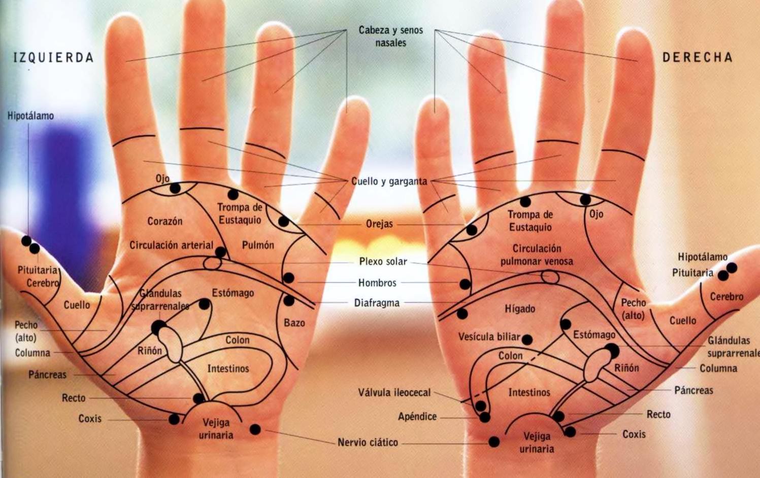 puntos reflexología manos